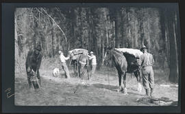 Loading pack horses and mules