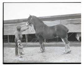 Man and child with draft horse
