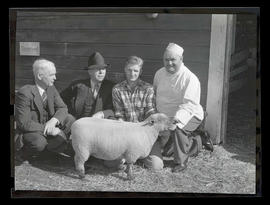 Four unidentified men with sheep, probably at Pacific International Livestock Exposition