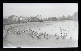 Ducks at Lake Merritt
