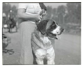 Dog, probably at livestock show