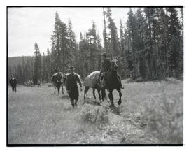 Packhorses carrying bodies of climbers Donald Burkhart, Davis McCamant and John Thomas