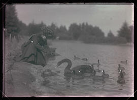 Irene Finley Feeding Coots