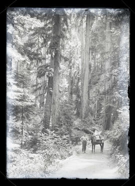 Unidentified man and horse on forest path