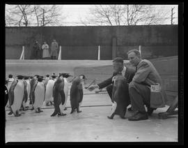 Penguins Checked by Alan Best and Jack Marks at the Oregon Zoo