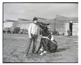 Clown posing with mule or donkey