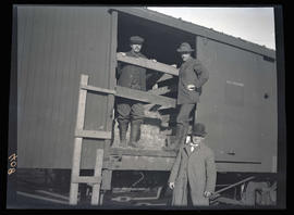 Elk loaded in boxcar