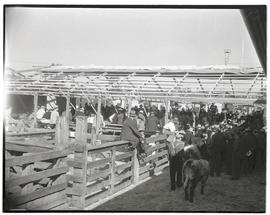 Crowd at livestock show
