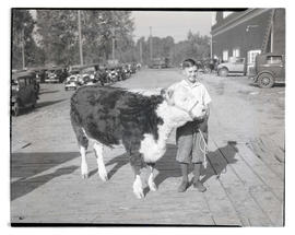 Boy posing with steer or heifer