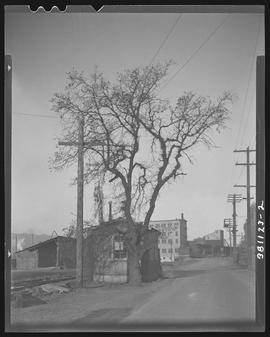 Old tree and warehouses