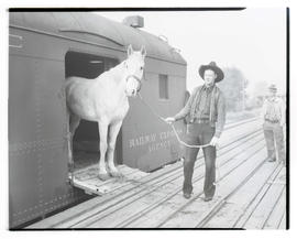 Man unloading horse from train car