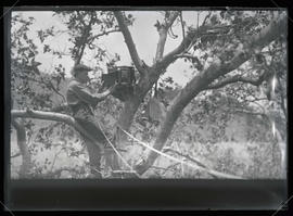H. T. Bohlman Photographing an Eagle's Nest