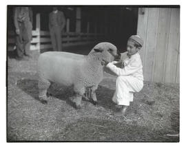 Boy with sheep