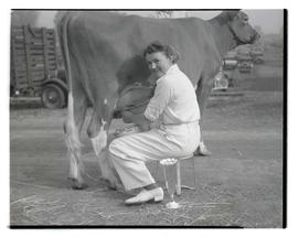 Unidentified woman milking cow, probably at Pacific International Livestock Exposition