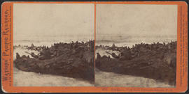 """Sea Lions, West End, Farallone Islands, P. O."" (Stereograph 2051)"