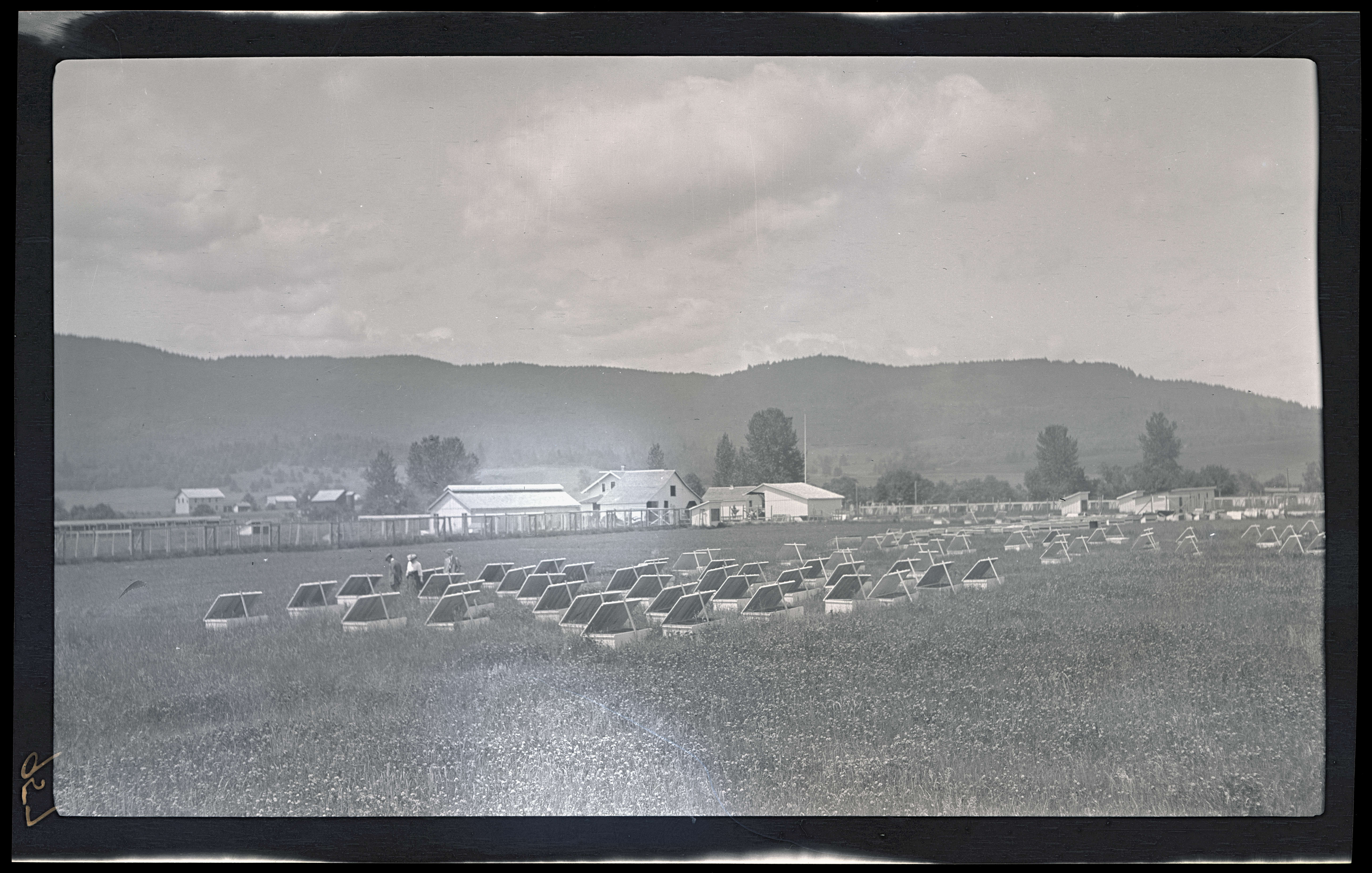 Pheasant nesting boxes - OHS Digital Collections