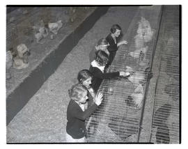 Girls looking at caged chickens