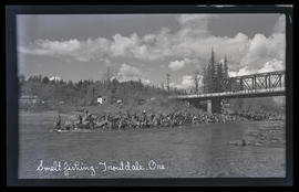 Smelt fishing - Troutdale, Oregon
