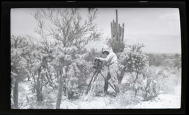 Photographing cactuses