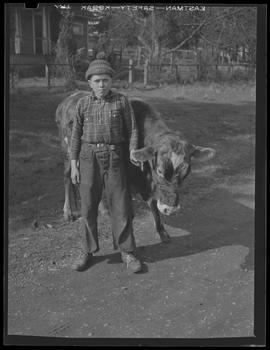 Adolescent with cow near St. Helens