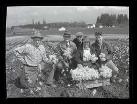 Five men in daffodil field at Oregon Bulb Farms