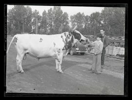 Unidentified boy and man with bull, probably at Pacific International Livestock Exposition