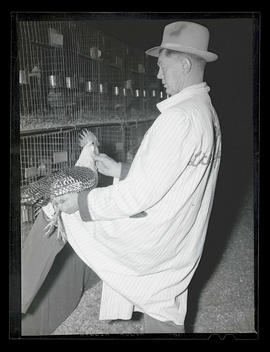 Man judging chickens at Pacific International Livestock Exposition?