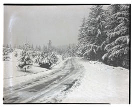 Snow-covered road and forest