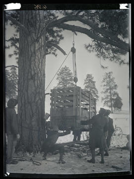 Lifting elk crates off wagons