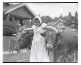 Girl with yoked cattle in parade