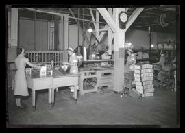 Workers packing graham crackers at National Biscuit Company plant?