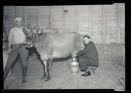 Two men posing with cow