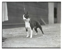 Dog, possibly named Step and Fetchit