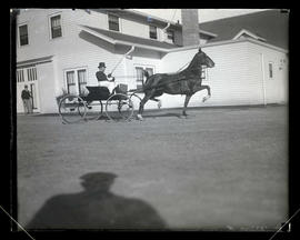 Man driving horse-drawn buggy