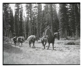 Rex Wilson leading packhorses carrying bodies of climbers Donald Burkhart, Davis McCamant and Joh...
