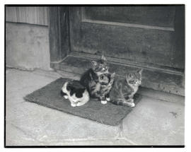 Kittens on doorstep