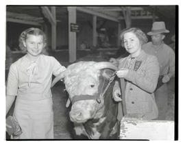 Young women with cow or steer in barn