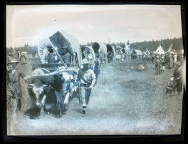 Covered wagons in commemorative pageant in Meacham, Oregon