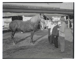 Four men with horse, probably at Pacific International Livestock Exposition