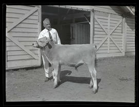 Man with young steer or bull outside barn