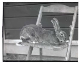 Rabbit on chair