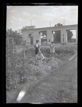 Women working in garden at county fairgrounds