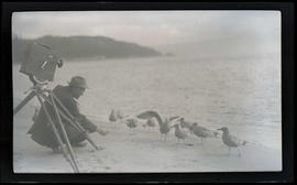 William L. Finley photographing gulls