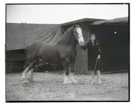 Person with draft horse