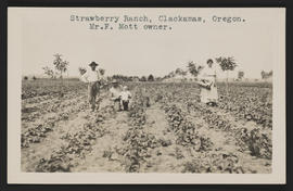 Strawberry Ranch, Clackamas, Oregon.