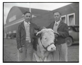 Two men with steer or heifer