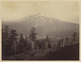 Mount Shasta (Mammoth 463)