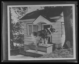 Composite photograph of Bobbie the Wonder Dog and his cottage at the Oregon Humane Society