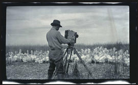 William L. Finley photographing pelicans