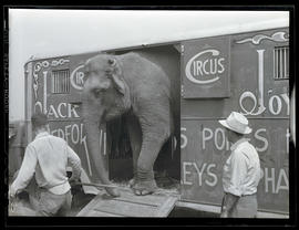 Elephant in circus trailer